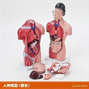 人体模型 女性or男性 リアルです JK-4325Y JK-4332Y