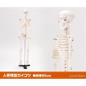 人骨模型 ガイコツ 骸骨 85cm JK-1751Y