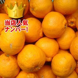 愛媛県産 デコすけ キズキズ君 10kg|daisuke|03