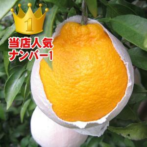 愛媛県産 デコすけ キズキズ君 10kg|daisuke|05