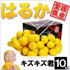愛媛県産 はるか キズキズ君 10kg|daisuke