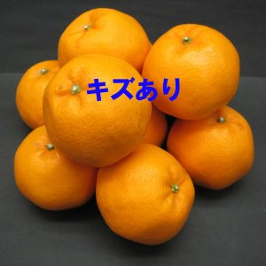 愛媛県産 はるみ キズキズ君 10kg|daisuke|04