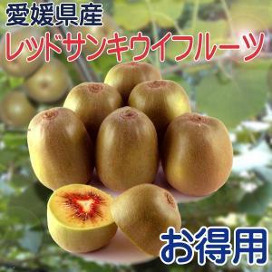 レッドサン キウイフルーツ お得用3kg