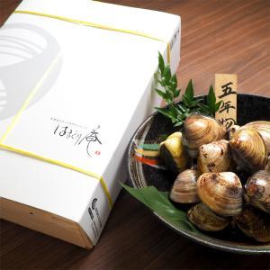 畜養はまぐり 5年もの 3kg / はまぐり 蛤 はまぐり庵 マルタカ水産 5cm前後 60粒前後 daiwa-kigyo
