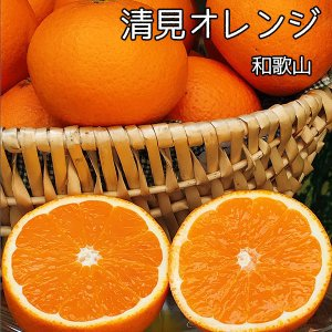 清見 オレンジ 送料無料 和歌山県産 清見 オレンジ 秀品 3Lサイズ 10Kg ギフト 贈答用 清...