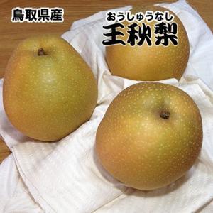 鳥取県産王秋梨 約5Kg 訳あり