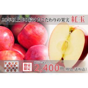 送料・税込み価格  食べきり使い切り小玉紅玉りんご 2.5kg|datesuimituen