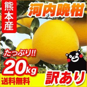 熊本産  訳あり 河内晩柑 20kg (10kg×2箱 ) ...