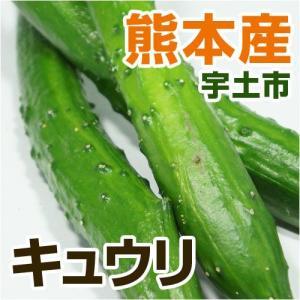 熊本の水と土で育った新鮮きゅうりです。みずみずしさと歯ごたえを楽しんでください。 生でサラダ、和え物...