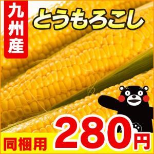 熊本県産 スイートコーン ≪Lから2Lサイズ≫ 1本 ( 野菜セット と同梱できます )( 九州 熊本 コーン とうもろこし )