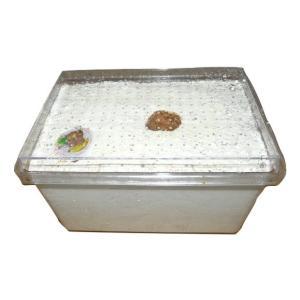 簡単セット!カワラ エノキ材 人工産卵床 SN2500M|dcats