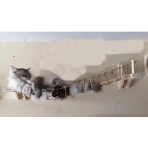 キャットアスレチック 壁用 猫の橋 猫の遊び場やお気に入りスポットに お部屋の中でも楽しく過ごせる快...