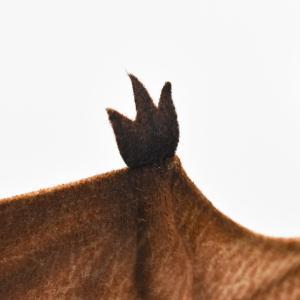 プテロダクティルス 62 恐竜 動物 ぬいぐるみ HANSA ハンサ 夏休み 帰省 プレゼント お土産|dearbear|07