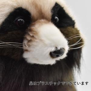 HANSA ハンサ タヌキ 7256 リアル 動物 ぬいぐるみ ギフト対象外|dearbear|07