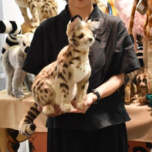 サーバルキャット 44 動物 ぬいぐるみ HANSA ハンサ 母の日 新生活 プレゼント お土産 お祝い dearbear 09
