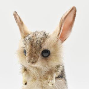 トビネズミ 19 動物 ぬいぐるみ HANSA ハンサ 母の日 新生活 プレゼント お土産 お祝い|dearbear|04