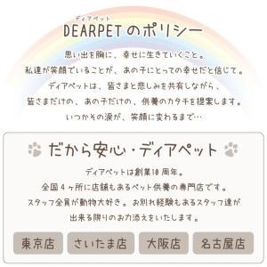 ペット用仏具 遺骨ペンダント メモリアル So...の詳細画像5