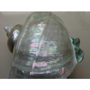 夜光貝オーロラ真珠層ルミナスシェルランプNo4 deepseawartergm0