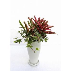 観葉植物 インテリア 創作 ネオレゲリア 寄せ植え (約全高500mm) delight-base