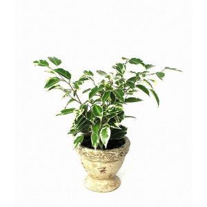 観葉植物 インテリア 創作 アンティーク テラコッタ スターライト (約全高400mm) delight-base