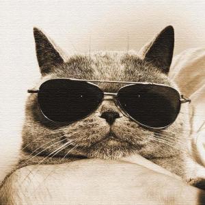 猫 アート アートパネル アートデリ Mサイズ 30cm×30cm lib-5109081s1 designstyle