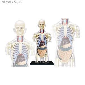 立体パズル 4D VISION 人体解剖モデル No.14 胴体解剖スケルトンモデル アオシマ/スカイネット(ZG33080)|digitamin