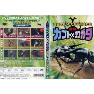 激闘カブト×クワガタ あつまれ!たたかう昆虫たち|中古DVD|disk-kazu-saito