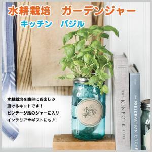 水耕栽培 バジル ガーデンジャー キッチン 瓶 贈り物 単品 簡単栽培 ガーデン|doanosoto