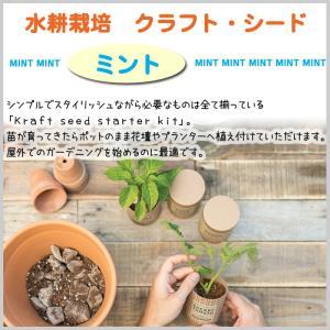 水耕栽培 ミント クラフト キッチン 贈り物 単品 簡単栽培 ガーデニング 料理 植え替え ハーブ doanosoto