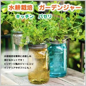 水耕栽培 パセリ ガーデンジャー キッチン 瓶 贈り物 単品 簡単栽培 ガーデン|doanosoto