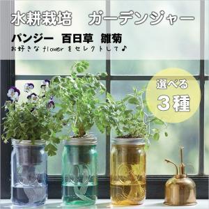 水耕栽培 フラワー ガーデンジャー 花 パンジー 百日草 雛菊  先行販売 プレゼント 簡単 HB|doanosoto