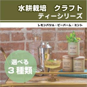 水耕栽培 クラフト・シード・スターターキット ティーシリーズ 3種類 ミント レモンバジル ビーバーム プレゼント 簡単 HB|doanosoto