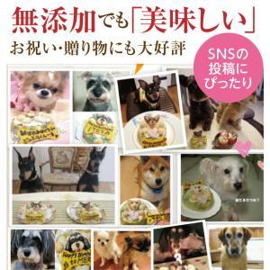 犬 ケーキ(無添加 誕生日ケーキ)似顔絵 犬用ケーキバースデー・クリスマスケーキ・誕生日のギフトに|dogdiner|05