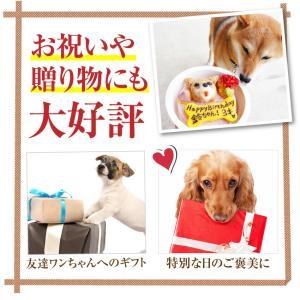 犬 ケーキ(無添加 誕生日ケーキ)似顔絵 犬用ケーキバースデー・クリスマスケーキ・誕生日のギフトに|dogdiner|06