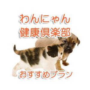 ペットの健康状態やストレスの度合いを、体毛(20本)を郵送するだけで測定できる健康チェックキットです...