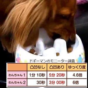 ドギーマン ゆっくりデコボコ食器 犬用 M サイズ|dole-store