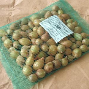 野菜・種/苗 ホームたまねぎ タマネギ 玉葱 球根 300g