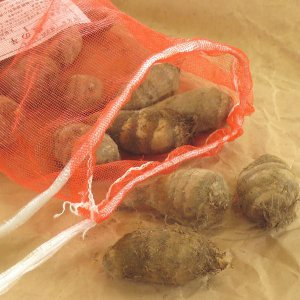 野菜・種/苗 唐のいも/とうのいも/エビ芋 里芋 種芋 1kg