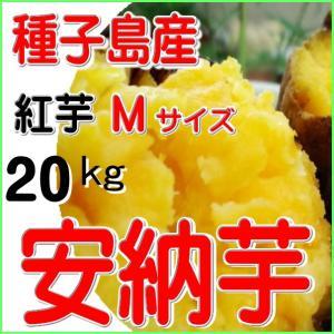 焼き芋用さつまいも種子島産安納芋/Mサイズ・紅20kg/南種...