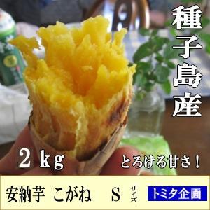 安納芋ミニ サイズ ・こがね 3kg/種子島産、焼き芋に最適...