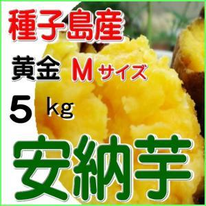 安納黄金芋さつまいも Mサイズ・こがね 5kg/焼き芋用サツ...