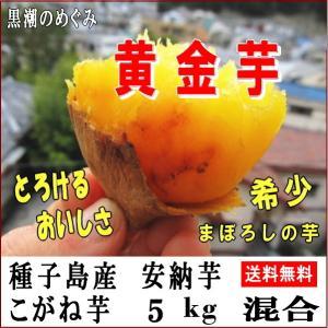 安納芋 サツマイモ こがね 5kg Mサイズ 種子島産黄金芋...