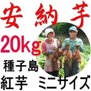 安納芋 種子島産/チビころ(ミニ・2S) 20kg/ 美味し...