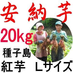 安納芋 種子島産/Lサイズ 20kg/越冬完熟安納芋/うまさ...