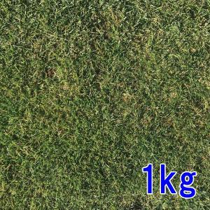 種子ケンタッキーブルーグラス1kg 80〜120平米分|donoubukuro