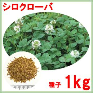 種子ホワイトクローバー1kg|donoubukuro