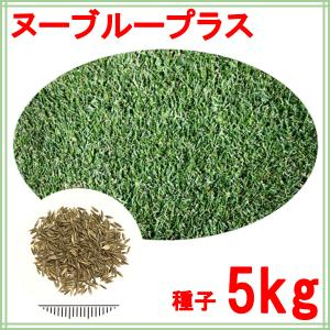 種子ケンタッキーブルーグラス ヌーブループラス 3kg 150〜300平米分|donoubukuro