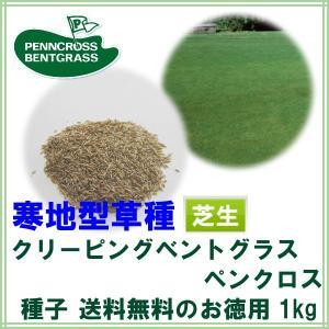 種子クリーピングベントグラス ペンクロス1kg 50〜80平米分|donoubukuro