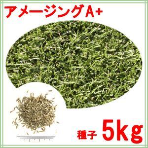 種子ペレニアルライグラス アメージングGS 5kg 60〜200平米分|donoubukuro