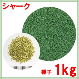 種子クリーピングベントグラス シャークコート1kg 50〜66平米分|donoubukuro